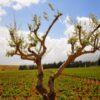 Regió vinícola Ksara