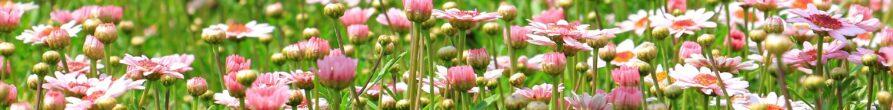 flower-meadow-1510602_1920
