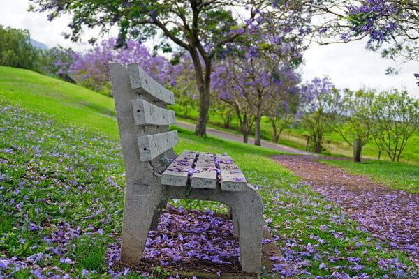 park-bench-jacaranda-purple-green-preview